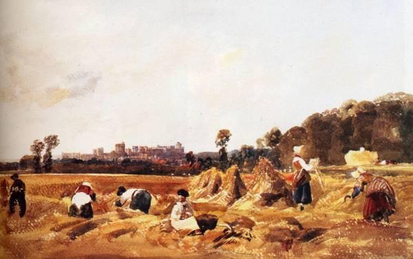 Cornfield Windsor